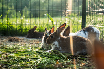 katte i kaninbur